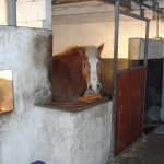 Im Stall